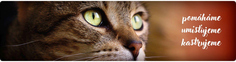 Piškvorka (mourovatá zraněná kočička)